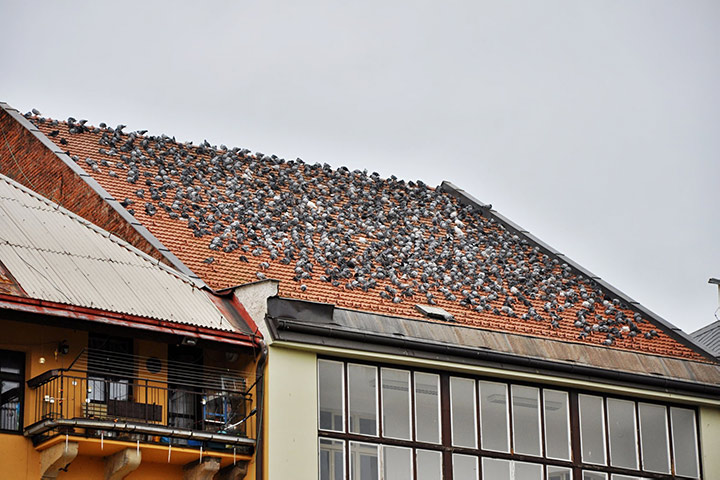 A2B Pest Control are able to install spikes to deter birds from roofs in Waltham Forest.