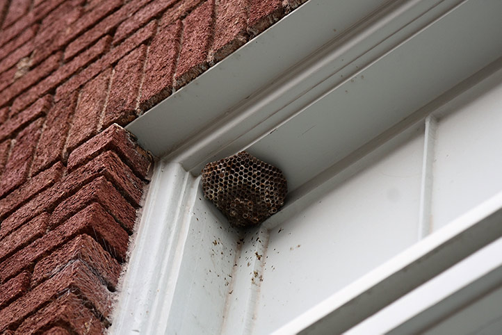 We provide a wasp nest removal service for domestic and commercial properties in Waltham Forest.